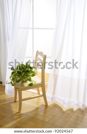 Houseplant on wooden chair in room - stock photo