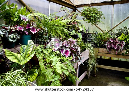 Houseplants growing in a commercial greehouse