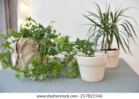 Houseplants on a gray table - stock photo