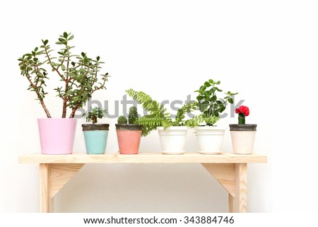 houseplants on a wooden bench on white background