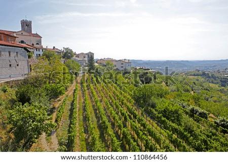 Houses among the vineyards in summer.Slovenske Konjice, Slovenia - stock photo