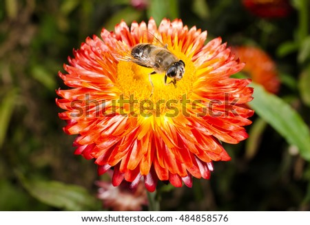 hover fly in late summer, flower