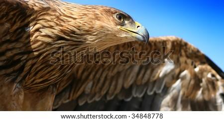 Hovering flight - stock photo