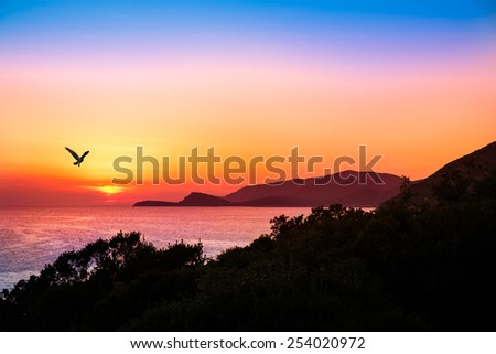 hovering raptor with a beautiful sunset over the ocean in the background - stock photo