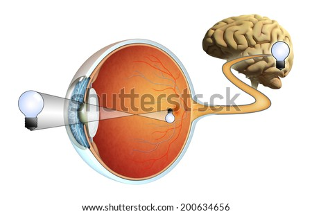 How images are captured by our eyes and processed by our brain. Digital illustration. - stock photo
