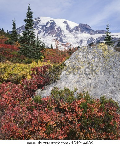 Huckleberry turns red at the base of Mount Rainier in Autumn; Mount Rainier National Park, Washington State - stock photo