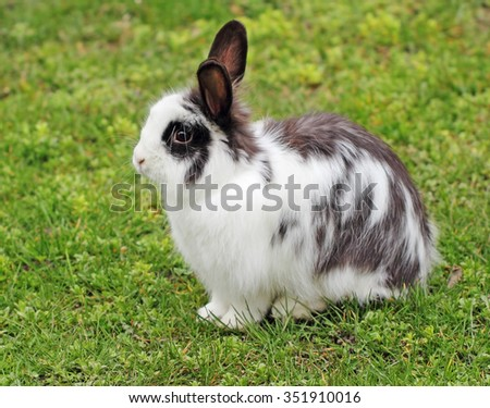 Huddled a bunny in the grass - stock photo
