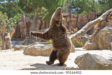 huge bear very expressive - stock photo