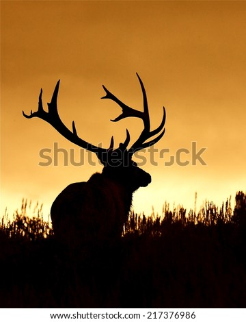 Huge Bull Elk Stag with trophy antlers in prairie habitat silhouette against colorful sunset sky Elk Hunting in the western United States of Wyoming, Colorado, Idaho, Montana, Utah, and Oregon - stock photo