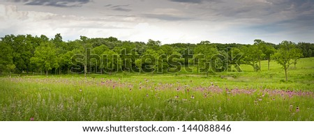 Huge drifts of purple coneflowers add their color to the summer prairie at The Morton Arboretum in Lisle, Illinois. - stock photo