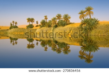 Huge dunes of the desert. Fine place for photographers and travelers. Beautiful structures of sandy barkhans. Fantastic nature of Sahara. Oasis. - stock photo