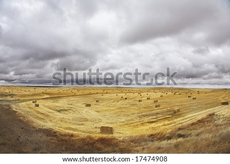 Huge field in state of Montana after a harvest. More magnificent pictures from the American and Canadian National parks you can look hundreds in my portfolio. Welcome!