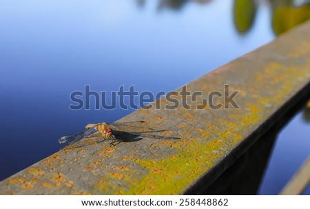 Huge insect waiting for prey - stock photo