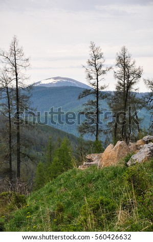Huge rocks on mountainside at background of forest and snow-covered mountain peak. Altai, Siberia, Russia