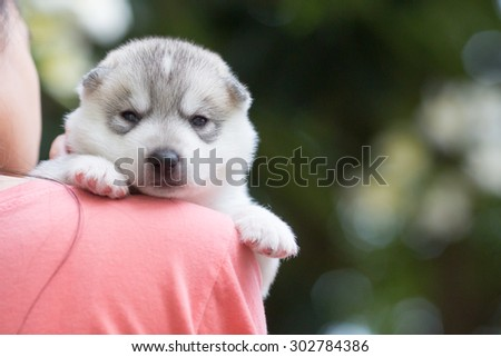 hugging puppy Siberian husky - stock photo