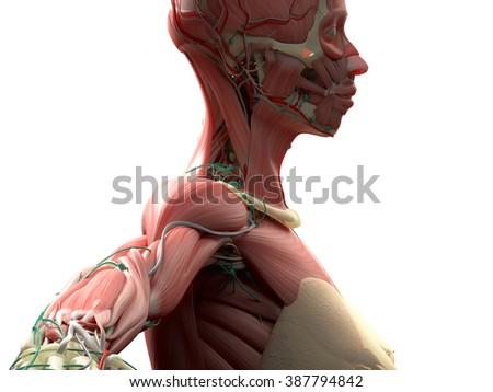 Human Anatomy 3 D Futuristic Technology Scan Stock Illustration