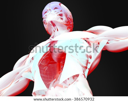 Human anatomy 3D futuristic technology scan.Torso and head. Vibrant colors. Biological information.  - stock photo