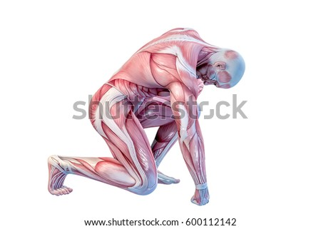 Anatomy Stock Images, Royalty-Free Images & Vectors | Shutterstock