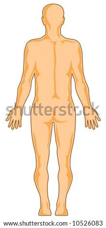 Human anatomy rear - stock photo