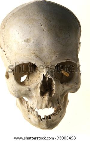 human anatomy skull - stock photo