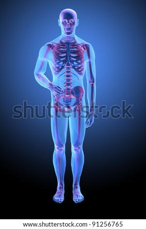 Human anatomy with visible skelton - medical illustration - stock photo