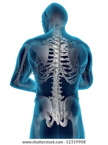 Human back - stock photo