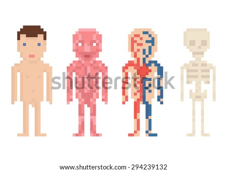 Human Body Anatomy - nude body, muscle, blood circle and skeleton, pixel art illustration on white - stock photo