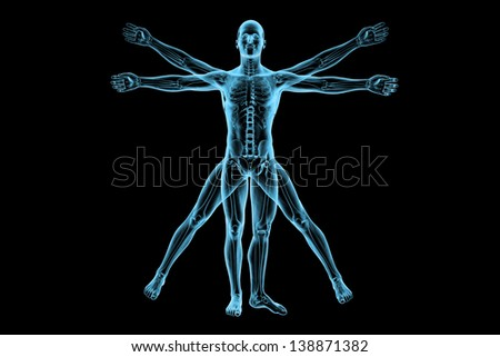 Human body of a Vitruvian man with skeleton for study - stock photo