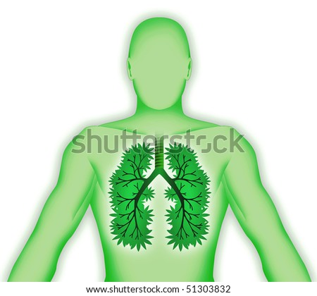 Human body three-dimensional lung tree on white - stock photo