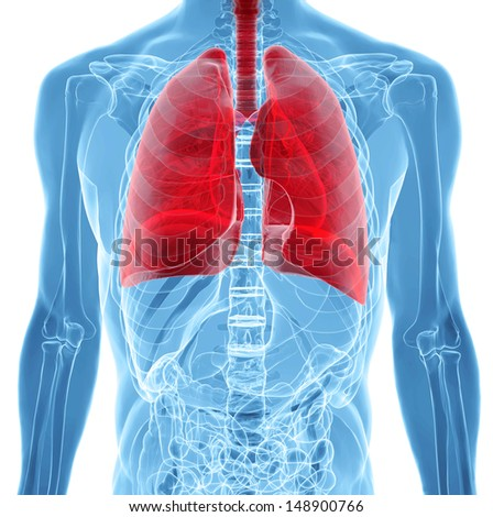 human body under X-rays isolated on white with highlighted  lungs - stock photo