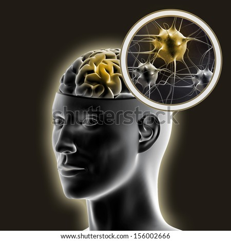 Human brain. - stock photo
