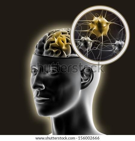 Human brain. - stock photo