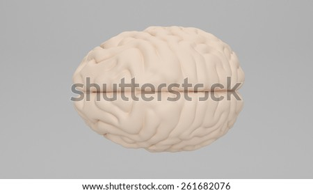 Human brain - stock photo
