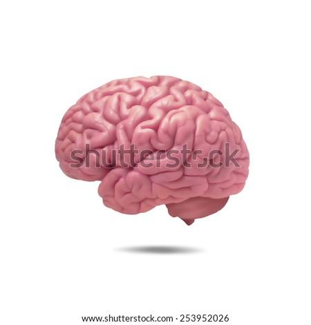 human brain and white background - stock photo