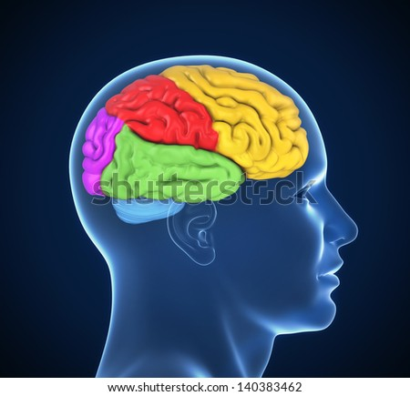 human brain 3d illustration - stock photo