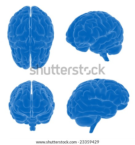 Human brain - different views - stock photo