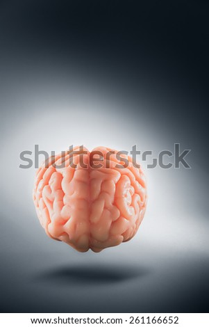 Human brain floating on a grey background, thoughts concept - stock photo