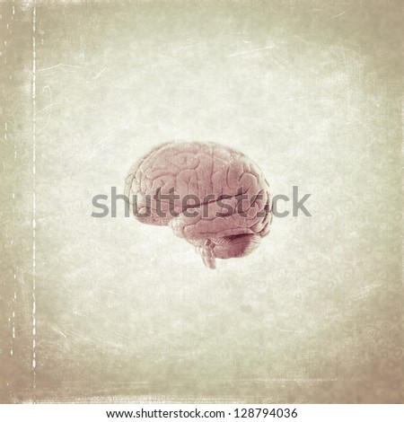 Human brain - illustration - stock photo