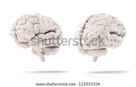 Human brain isolated on a white background - stock photo