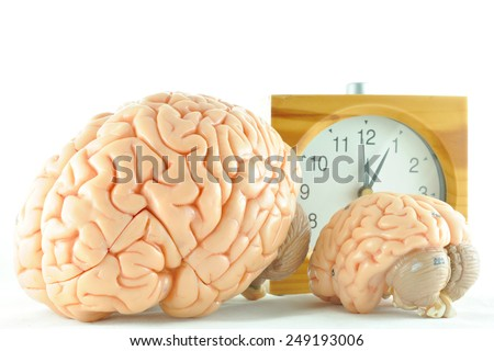 human brain model and clock - stock photo