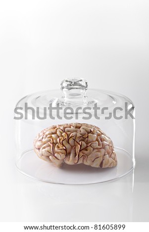 Human brain model in a glass container on white background - stock photo