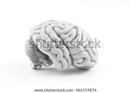 human brain model with black and white color