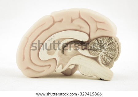 human brain model with old color style