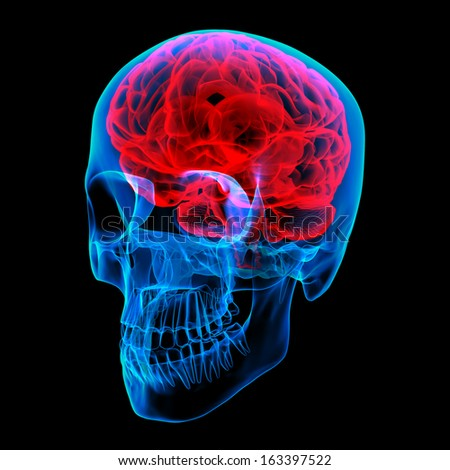 Human brain X ray - right front view - stock photo