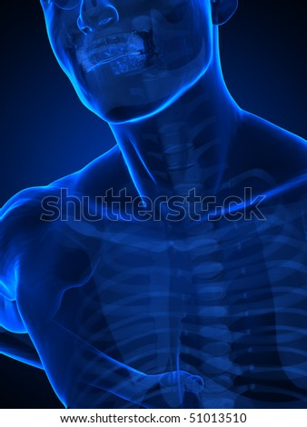Human chest with ribs x-ray view