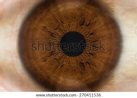 Human eye. macro shooting - stock photo