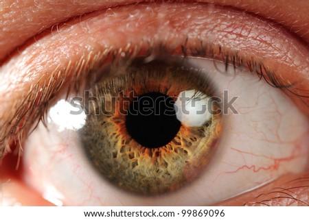 Human eye, macro shooting - stock photo