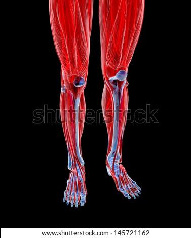 Human feet under X-rays isolated on black.  - stock photo