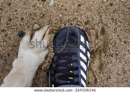 Human foot wearing sport shoes and dog paw, overhead shot, concept of togetherness and sport - stock photo