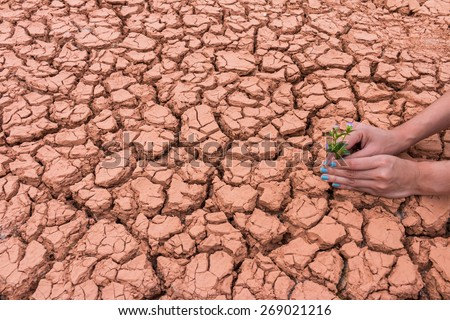 Human gardening the flower on cracked earth to help the Earth - stock photo
